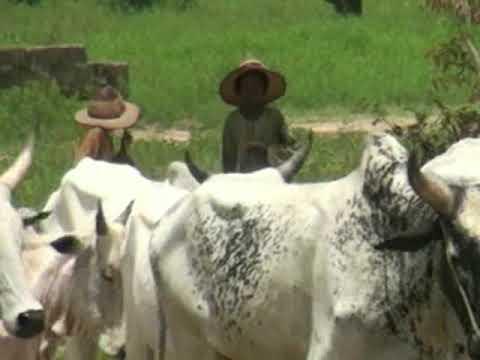 Resurgence of Cattle rustling and armed banditry in Zamfara State