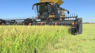 Harvesting rice in Glenn County