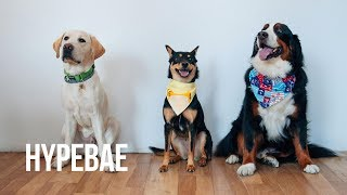 Year of the Dog: GoPro Celebration With Four Pups