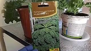 Новый стеллаж для рассады + обзор листовой капусты
