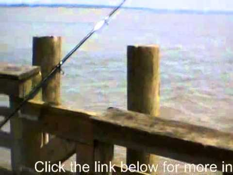 Fishing in leesylvania state park virginia april 27 for Virginia out of state fishing license