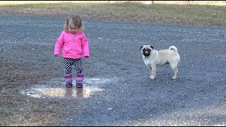 THE DOG DAYS OF FALL / TODDLER WALKING DOGS