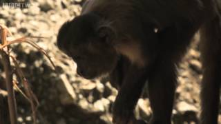 Snake eats a rat whole   Wild Brazil  Episode 1 Preview   BBC Two