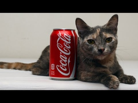 Cute Cat Could Be The World's Shortest Feline