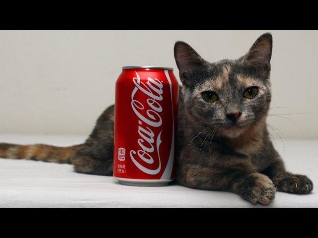 34db7cf27bf0 Πόσο ύψος έχει η πιο κοντή γάτα του κόσμου  - iPop