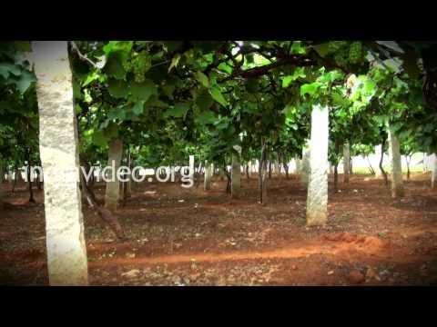 Grape Garden  Bangalore  Karnataka