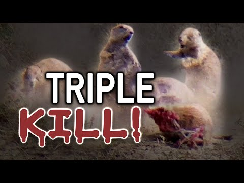 Prairie Dog Hunting Armageddon! Slow Motion Explosions!