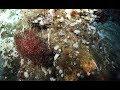 FK181031 - Pescadero Vent Diving - Wrap Up Video