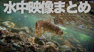 渓流の流れにGopro沈めてみると.....最近の渓流釣り水中映像まとめ。長野県南佐久漁協渓流ルアー釣り