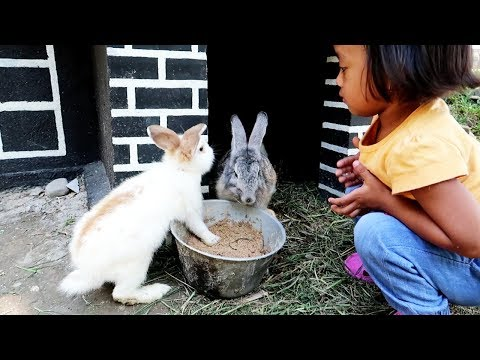 Kelinciku ❤ Lagu Anak Indonesia