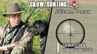 Crow hunting - .223rem V-max