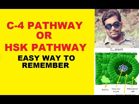 C4 PATHWAY OR HSK PATHWAY - EASY WAY TO REMEMBER