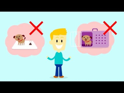 How To Potty Train A Puppy   House Train Your Dog   House Training a Puppy