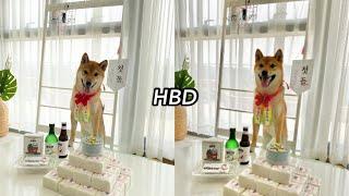 시바견 롱롱이의 첫 생일파티? | 돌잔치, 강아지 케이…