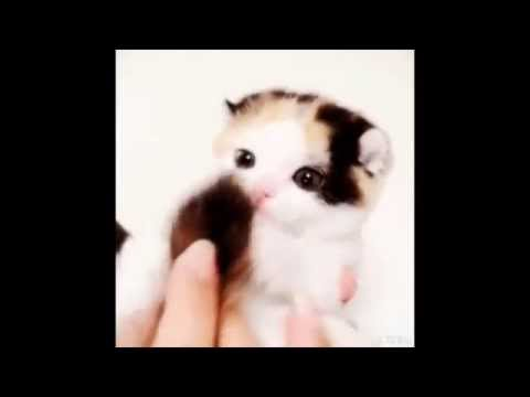 Funny and cute talent cats vine