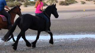 Senna bareback bridleless riding