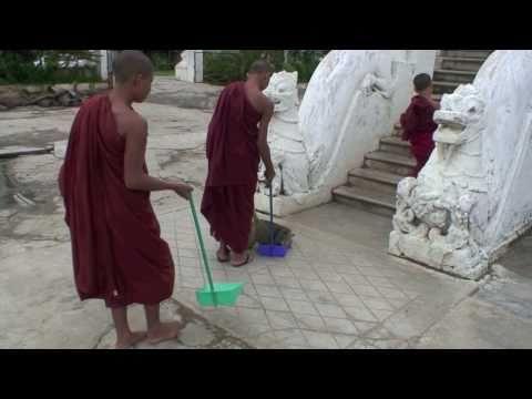 Burmese monastery cats
