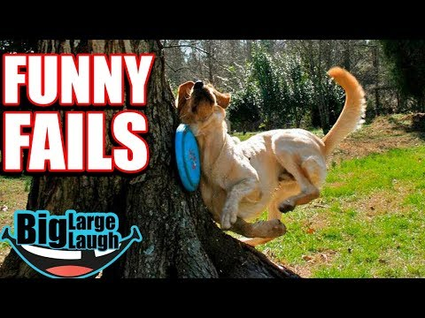 😂 EVERYTHING GOES WRONG 😂 Ultimate Funny Fails 2019 | Funny Compilation
