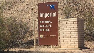 Imperial NWF at Martinez Lake Southeast of Cibola NWF