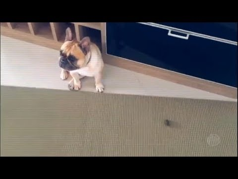 Câmeras escondidas flagram as travessuras dos pets quando ficam sozinhos em casa