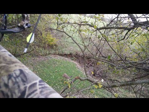 Deer Hunting! Young Button Buck Close Range!