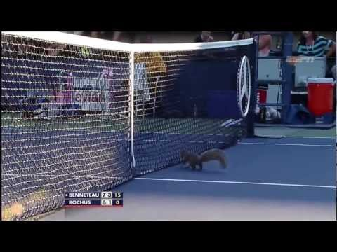 Squirrel at US Open 2012