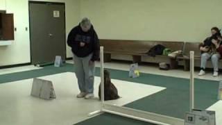 Mlotc Rally Obedience Training Class - Feb 2,