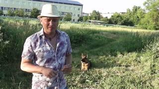 обучение собаки .трюк