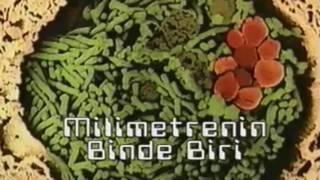 Virüsler Bakteriler Mikroplar   Türkçe Belgesel İzle