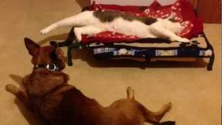 The Cat Steals The Dog's Bed