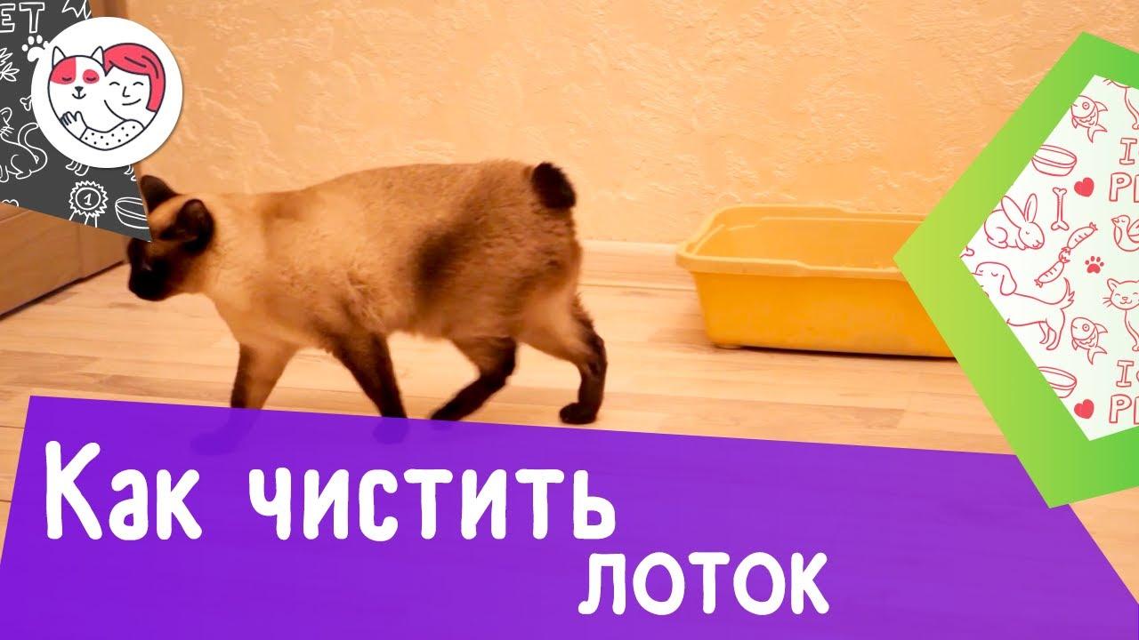 Как правильно чистить кошачий лоток: видеоинструкция