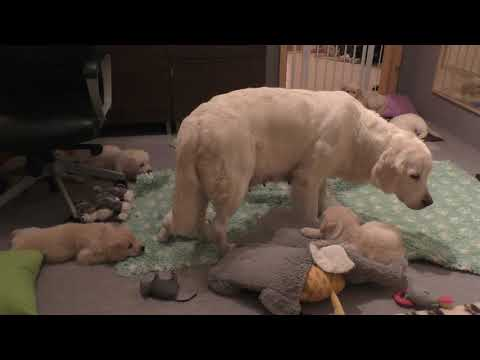 Joey Brooks - Mama Dog Teaches Her Puppies Patience