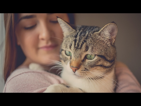 The Bizarre Mind Controlling Parasite You Contract From Your Cat Youtube