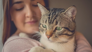 The bizarre mind-controlling parasite you contract from your cat