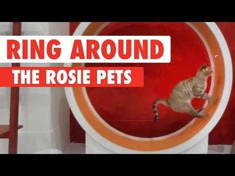Ring Around The Rosie Pets
