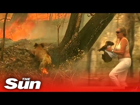 Woman Saves Scorched Koala From Australian Bushfire