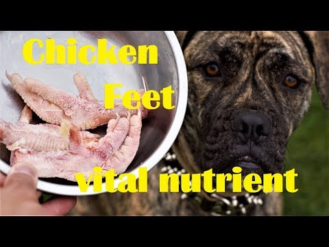BARF Chicken Feet For Dog Vital Nutrient For Joint And Teeth