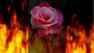 Carol Hahn - Where is the Passion - Johnny F Radio Mix.wmv