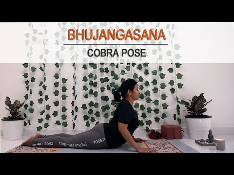 Cobra Pose Variations | Everyday Pose In Midlife |  Back Bend | Yoga Back Stretch | Bhujangasana