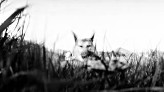 Jean-Louis Murat - Nuit sur l'Himalaya (teaser)