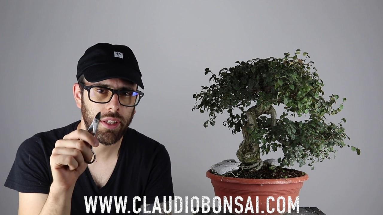 Coma Annaffiare Un Bonsai Youtube