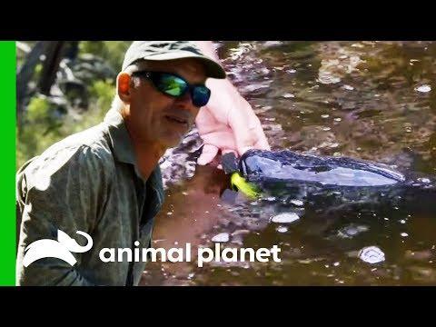 Can Jeremy Catch A Near-Extinct Murray Cod? | Jeremy Wade's Dark Waters