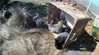 Выпустил кроликов в поле.Интересное в конце.