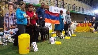 BEST IN SHOW - 1 группа пород (большие собаки). Чемпионат Армении. Выставка «Планета собак 2017»
