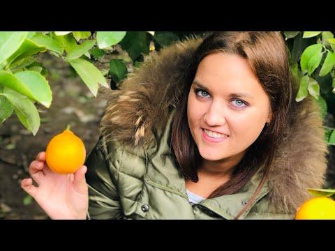 Узбекистан.Почему узбекcкие лимоны считаются лучшими в мире??!!