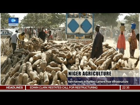 Niger Agriculture: Yam Farmer In Palkoro Lament Poor Infrastructure