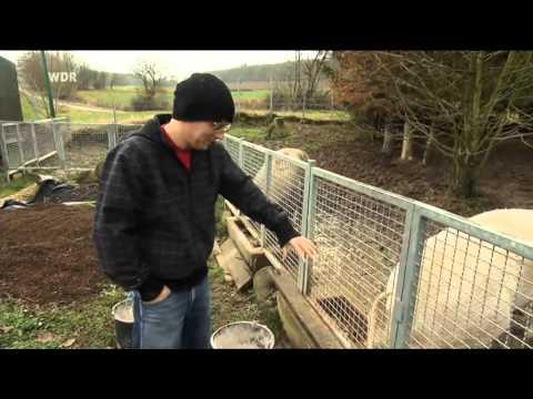 Thomas D über seine Schweine