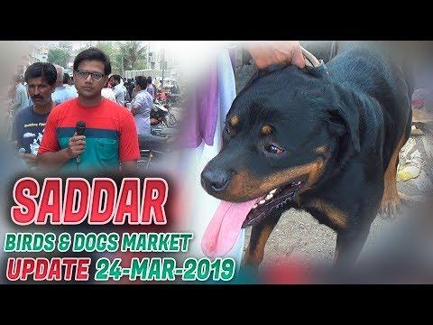 Saddar Sunday Dogs Cats & Birds Market Updates 24-3-19 (Jamshed Asmi Informative Channel) Urdu/Hindi