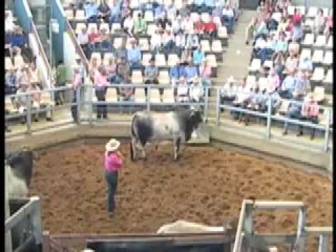 ROCKHAMPTON BRAHMAN WEEK 2009 LOT733