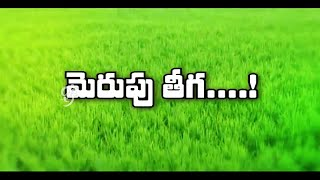 Basmathi Rice Cultivation - Eruvaka - 16-10-2014 - 99tv